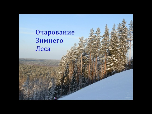 Очарование Зимнего Леса