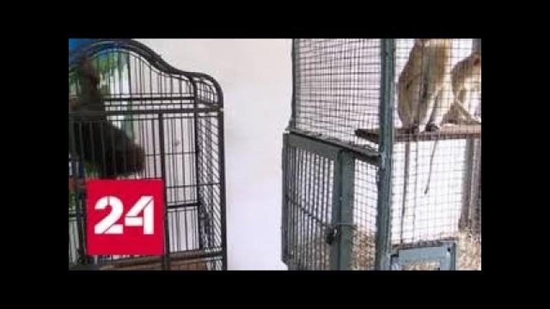 Таможенники задержали автобус с контрабандными обезьянами - Россия 24