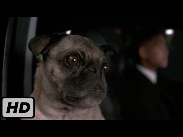 Самый крутой напарник Фрэнк Frank the Pug Прикол Люди в черном 2 2 9 Men in Black II 2002
