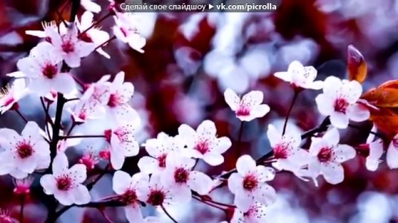 Поздравление с наступающим Днём Весны 8 Марта.