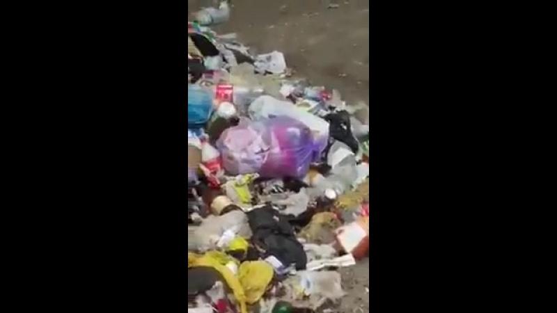 Из-за гор мусора во Львове появились крысы-гиганты Новини Львова.mp4
