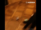 Котики-воришки