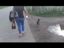 Собака-обоссака 😁
