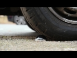 Catclaw bursts car tyres on pavement.mp4