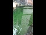 Мос зоопарк 2