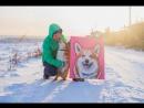 Animal Art | Borodachev Art | video