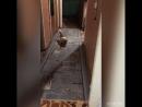 Думала только кошки играют с лазерной указкой