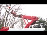 В центральном парке Владикавказа производится кронирование деревьев