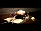 Nolans Cheddar Commercial: