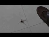 X-Files spiders