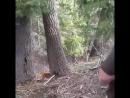 Собаки которые умеют залезать на дерево что бы там достать медведя.