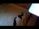 Второй кошкин дом 2