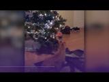 Названы способы защиты елок от котов