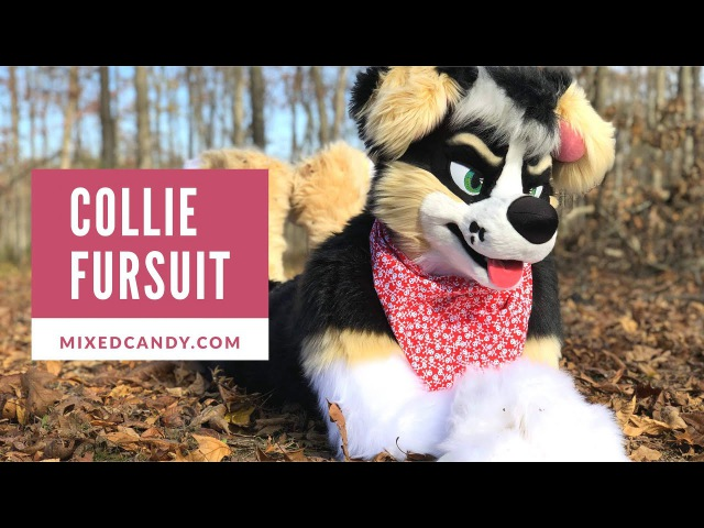 Collie Fursuit by Mixedcandy