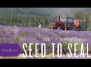 Young Living's Seed to Seal