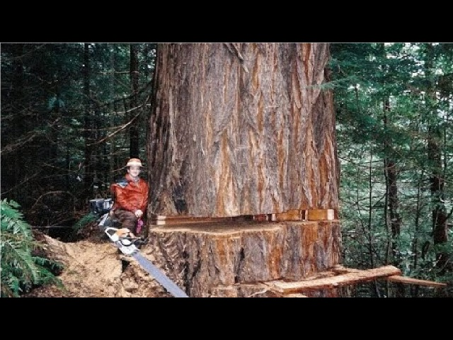 Amazing Dangerous Skills Fastest Tree Felling Heavy Biggest Tree Cutting Down Machines