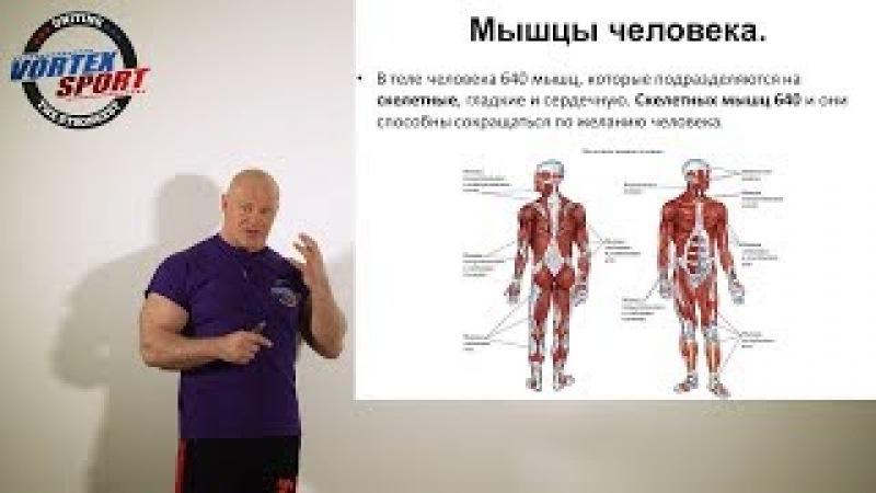 Как работают мышцы и от чего зависит сила, скорость, выносливость и ловкость человека!