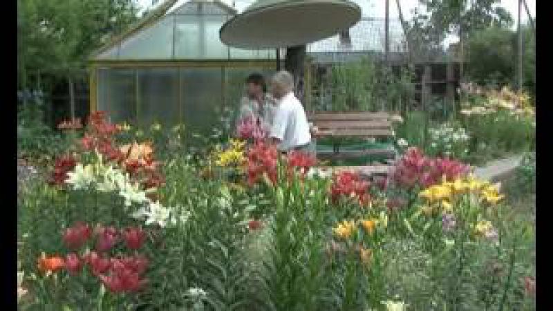 Советы дом, сад огород. Семья на даче летом