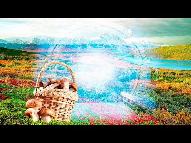 Пошел за грибами и нашел ПОРТАЛ в другой мир или иное измерение