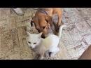 приколы с животными Топ смешные собаки и кошки Приколы про животных смешные жив ...