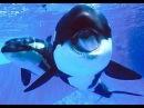 Orca whale babies
