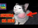 Спасаем Кота Везем Коржика к ветеринару Что случилось с нашим Котиком