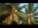 19 Чудеса природы Сейшельские острова Маврикий Конго