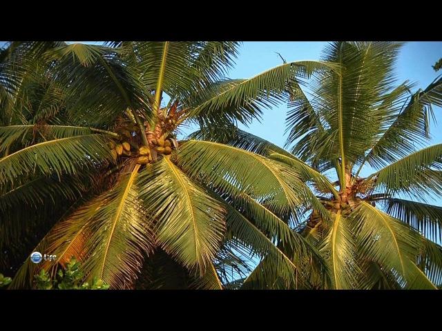 19. Чудеса природы. Сейшельские острова. Маврикий. Конго.