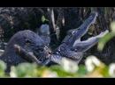 Удивительные моменты из жизни животных Часть 1 Самые захватывающие кадры из жизни животных