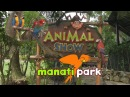 Manati park Show Animal parrots Шоу попугаев в Манати парк Баваро Доминикана