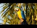 Blue-and-yellow Macaw taking care of the nest, Ara ararauna,  Arara-canindé, Nesting season,