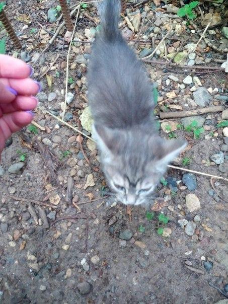 Два котёнка крошки,живут на улице ,людей не боятся ,в хорошие руки.