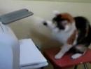 Кошка и принтер