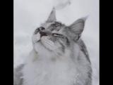 Оо даааа! Снежочек