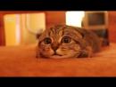Когда смотришь ужастик ночью (Прикол с котом)
