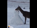 Снеговичок какой ты кусенький подумал оленёнок
