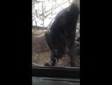 Eh o macaco punhetante c12