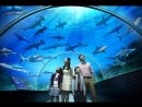 Океанариум S.E.A.Aquarium