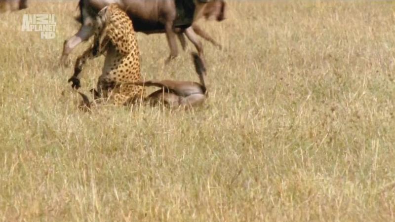 АР. В дебрях Африки. Намибия. Пески времени. 2002