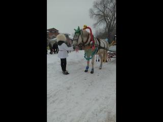 лошадь в донском