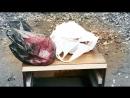 В Бийске нашли младенца в мусорном баке (05.10.2017 г, Бийское телевидение)