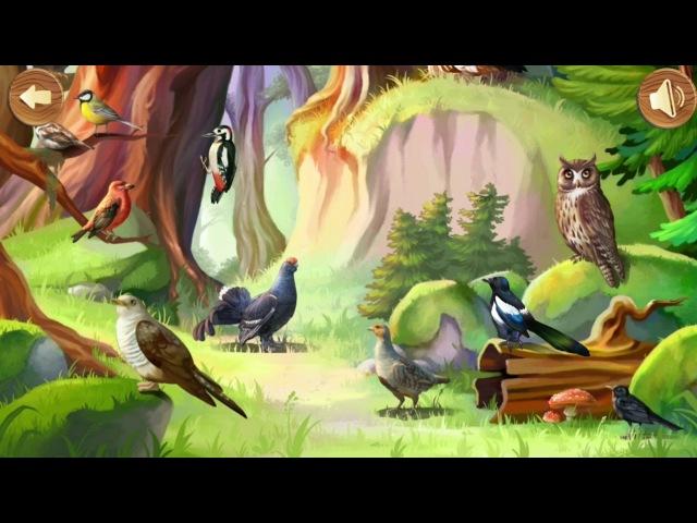 Птицы леса. Развивающее видео для детей » Freewka.com - Смотреть онлайн в хорощем качестве