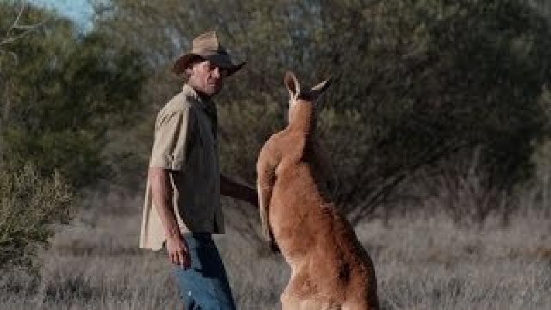 Brolga is chased by a Kangaroo - Kangaroo Dundee: Episode 6 Preview - BBC Two