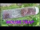 How to Make a Mouse Trap – Rat trap Video Easy, Keri mousetrap!56