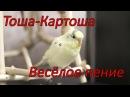 Веселое пение волнистого попугая Тоши в 11 месяцев