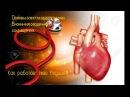 Как работает твое сердце1 Основы ЭКГ. Биохимия сердечного сокращения.