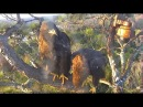 2 21 18 ~ AEF NEFL EAGLES SPIRIT JOINS SKY ON SUNSET BRANCH