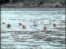 Школа боевого плавания в Кумамото.