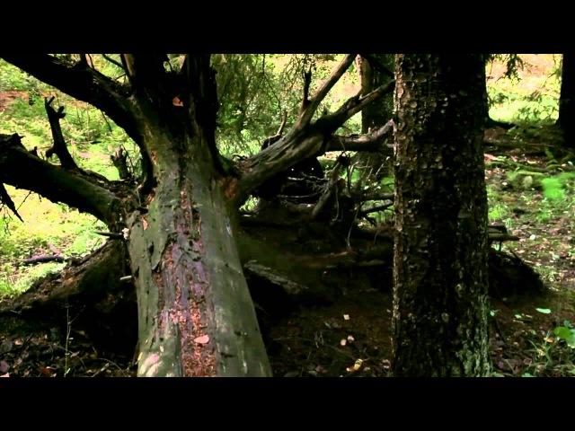 Vėjopatis - Taškas (Girių Dvasios Remix)