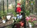 Октябрина Ганичкина. Огород на подоконнике. Листовая свекла (мангольд), сельдерей и петрушка.
